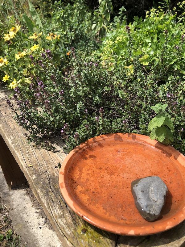 water source for garden pollinators